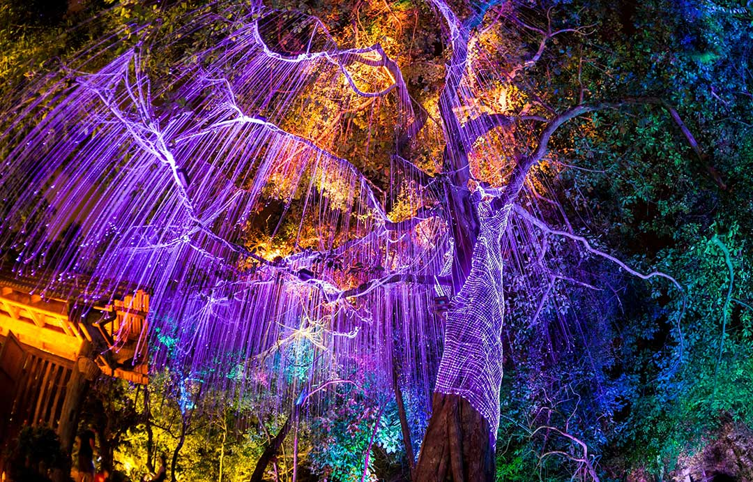Night Garden at Miami's Fairchild Botanical Garden