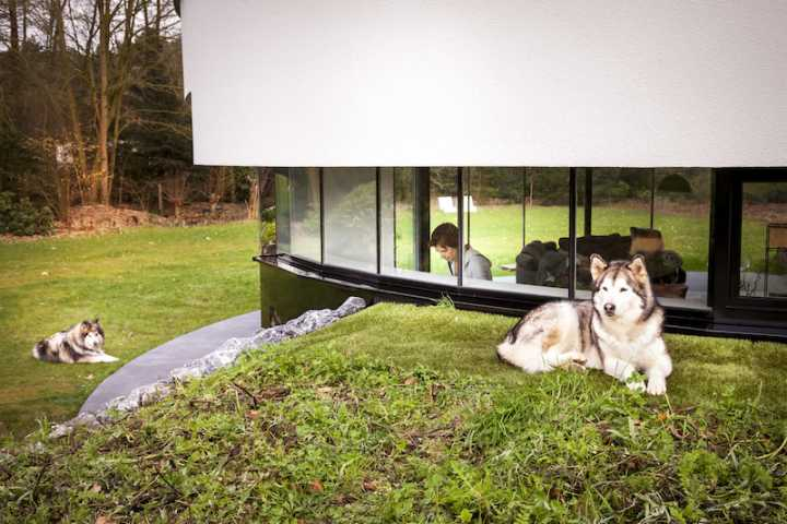 dogs in front of round house